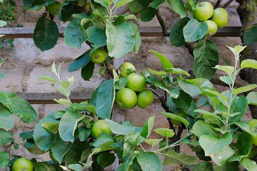 Fruit, Food, Leaf, Agriculture, Plant, Nature, Farm