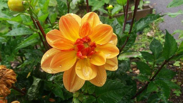 Nature, Flora, Garden, Flower, Summer, Blooming