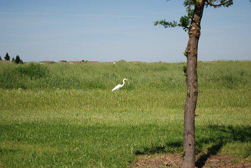Nature, Landscape, Grass, Agriculture, Field, Bird