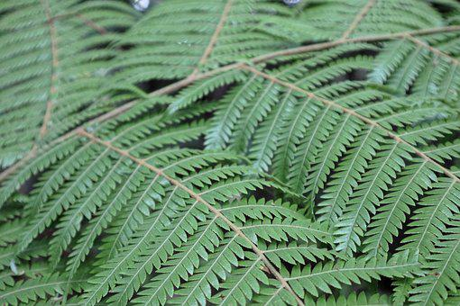 Leaf, Nature, Fern, Flora, Desktop, Growth, Frond