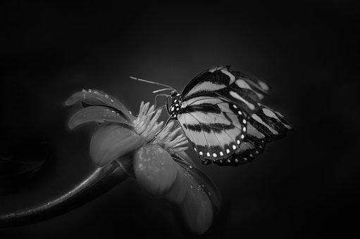 Insect, Butterfly, Invertebrate, Nature