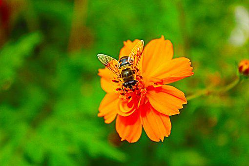 Nature, Insect, Summer, Flower, Plant, Bee, Spring