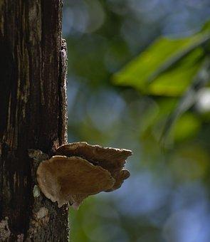 Tree, Wood, Fungus, Mushroom, Fall, Nature, Outdoors