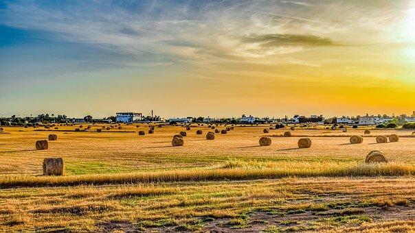Field, Landscape, Agriculture, Farm, Nature, Rural