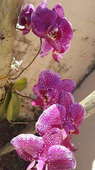 Nature, Flower, Plant, Tropical