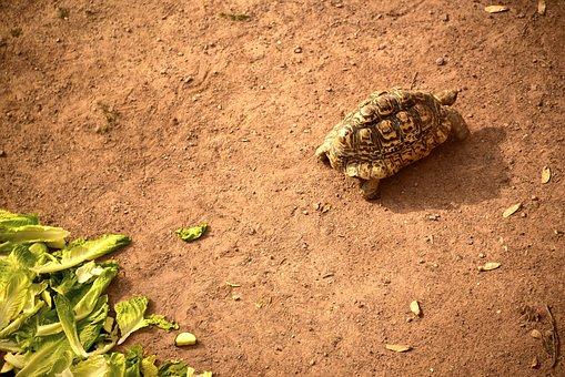 Turtle, Nature, Soil, Food, Earth