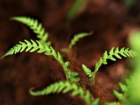 Fern, Leaf, Flora, Frond, Outdoors