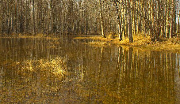 Spring, Woods, Nature, Water, Reflection, Snow Melt