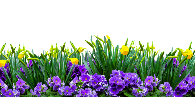 Nature, Time Of Year, Spring, Flower, Isolated