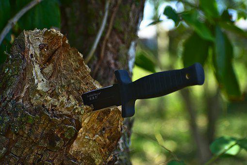 Stab Knife, Tree, Wood, Nature, Outdoors, Boot Knife