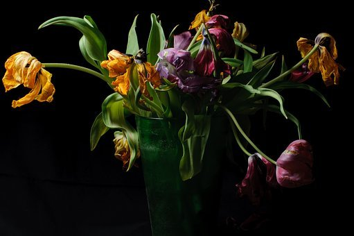 Parrot Tulips, Tulips, Flowers, Faded, Strauss, Vase