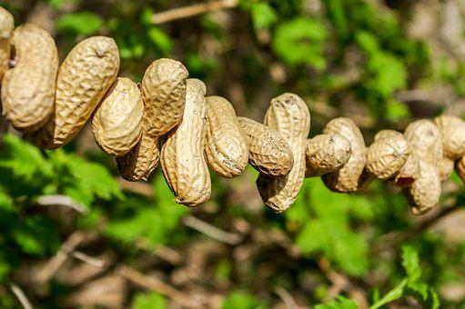 Peanuts, Bird Seed, Summer, Winter Feed, Nature, Food