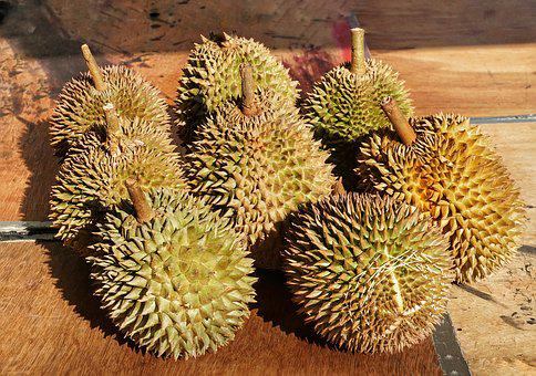 Syrian, Durio, Fruit, Spine, Prickly, Sharp, Strong