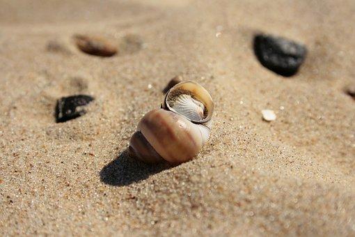 Sand, Beach, The Coast, The Exoskeleton, Shoreline
