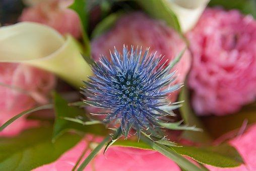 Flower, Thistle, Lys