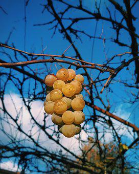 Tree, Nature, Fruit