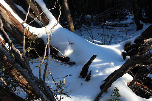 Winter, Nature, Snow, Cold, Tree, Outdoors, Wood