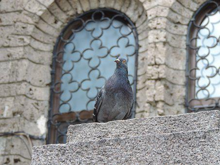 Stone, Old, Architecture, Building, Wall, Bird, Rough