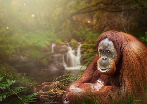 Photo Montage, Orangutan, Baby, Waterfall, Tree, Forest
