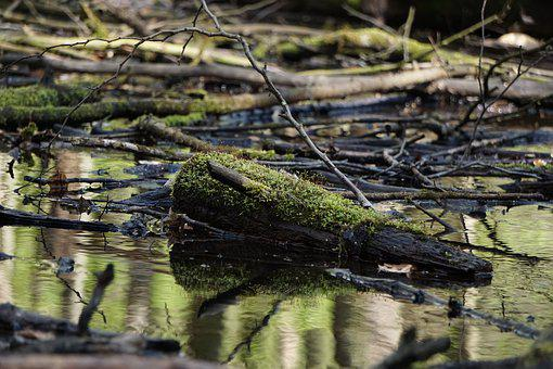 Moss, Waters, Nature, Reflection, River, Wood, Log