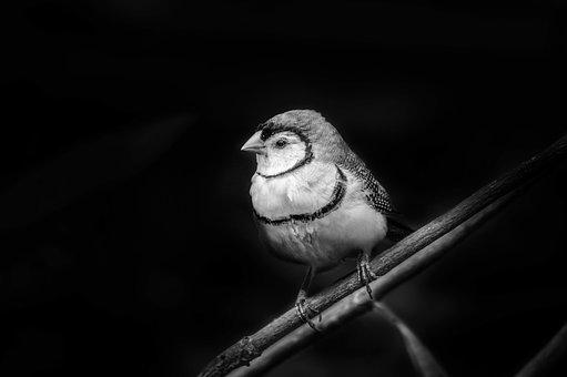 Bird, Nature, Wildlife, Portrait, Animal