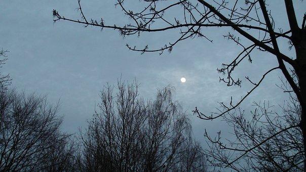 Tree, Nature, Branch, Winter, Sky, Moon