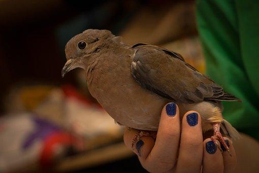 Birds, Wild Life, Outdoors, Nature, One, Animalia