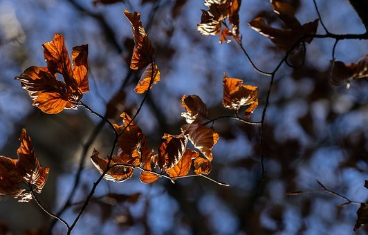 Autumn, Season, Tree, Leaf, Nature, Plant, Wood, Bright