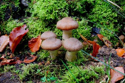 Mushroom, Rac, Autumn, Nature, Mecklenburg
