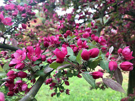 Tree, Bud, Buds, Branch, Branches, Nature, Spring