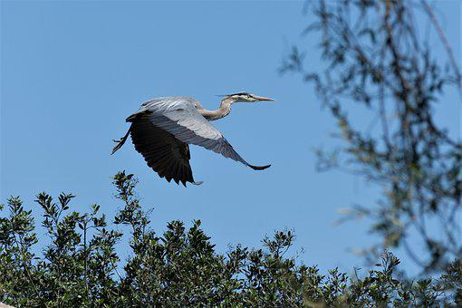 Bird, Wildlife, Nature, Animal, Heron, Stork, Egret