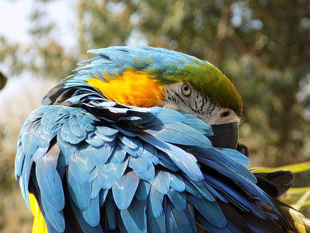 Bird, Feather, Wing, Parrot, Wildlife, Animal, Beak