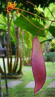 Saraca Dives, Pink, Veined, Leaf, Small, Orange, Flower
