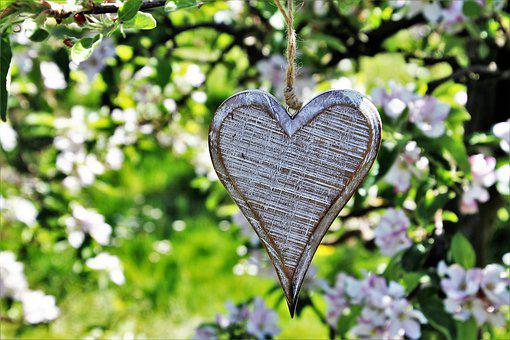 Heart, Wooden, Sad, Spring, Fruit Trees, Flower, Nature