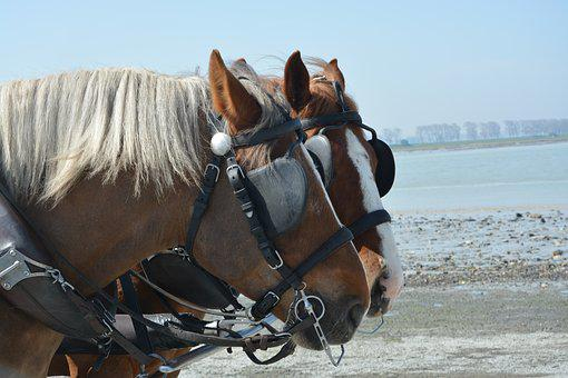 Horses, Horses Yoked, Dressage, Portrait, Head, Horse