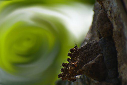 Bees, Insects, Nature, Wildlife, Swirl, Bokeh, Natural
