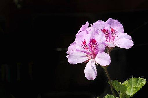 Flower, Nature, Plant, No One, Petals, Leaves, Garden
