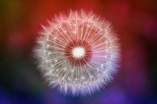 Nature, Dandelion, Colorful, Macro, Spring, Seeds