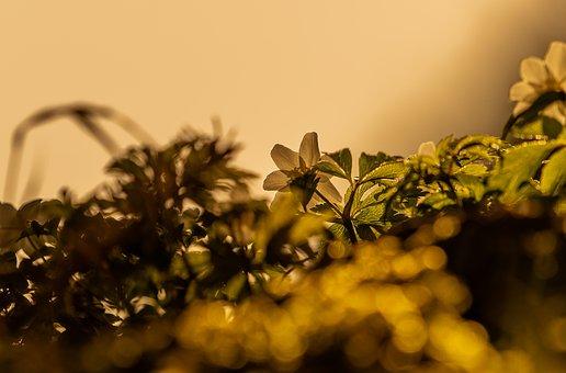 Background, Nature, Plant, Blur, Close, Golden, Color