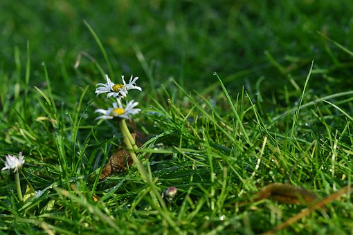 Grass, Nature, Meadow, Summer, Field, Old Leaves