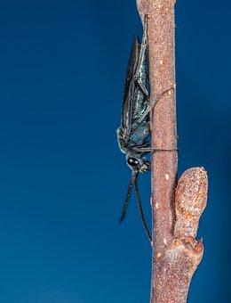 Insect, No One, Bespozvonochnoe, Nature, Outdoors