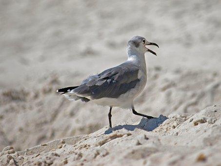 Bird, Wildlife, Nature, Outdoors, Animal, Sand, Water