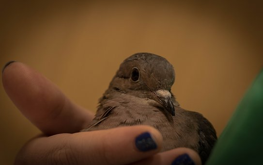 Birds, Wild Life, Nature, Outdoors, One, Pen, Peak