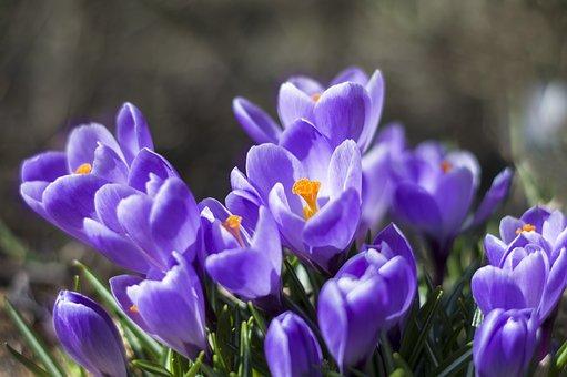 Nature, Flower, Plant, Garden, Blooming, Petal