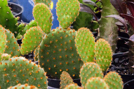 Cactus, Cactaceae, Plant Succulent, Thorny, Post