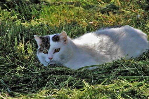 Cat, Spring, Field, Grass Skoszona, Animals, Nature