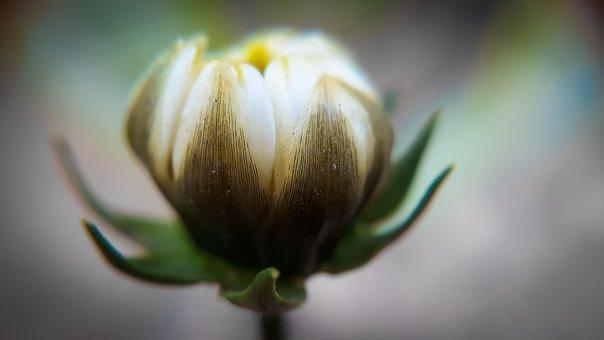 Flower, Nature, Leaf, Flora, Garden, Summer, Outdoors