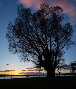 Tree, Landscape, Nature, Dawn, Sun, Silhouette, Sunset