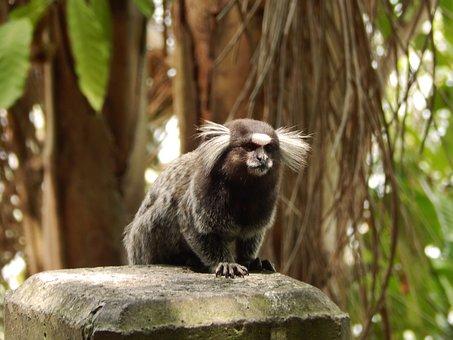Wildlife, Nature, Monkey, Mammals, Animalia, Primates