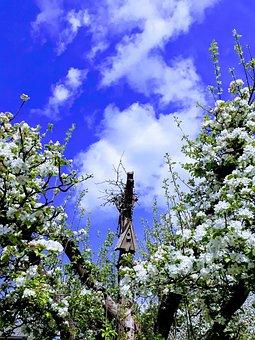 Apple Tree, Aviary, Sky, Apple Blossom, Blue